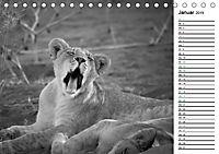 Löwen schwarz weiß (Tischkalender 2019 DIN A5 quer) - Produktdetailbild 1