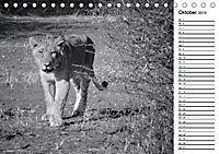 Löwen schwarz weiß (Tischkalender 2019 DIN A5 quer) - Produktdetailbild 10
