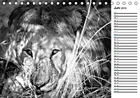 Löwen schwarz weiß (Tischkalender 2019 DIN A5 quer) - Produktdetailbild 6