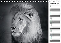 Löwen schwarz weiß (Tischkalender 2019 DIN A5 quer) - Produktdetailbild 12