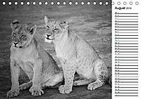Löwen schwarz weiß (Tischkalender 2019 DIN A5 quer) - Produktdetailbild 8