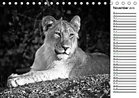 Löwen schwarz weiß (Tischkalender 2019 DIN A5 quer) - Produktdetailbild 11