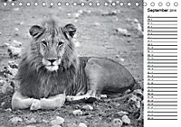 Löwen schwarz weiß (Tischkalender 2019 DIN A5 quer) - Produktdetailbild 9