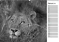 Löwen schwarz weiß (Wandkalender 2019 DIN A2 quer) - Produktdetailbild 2