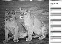 Löwen schwarz weiß (Wandkalender 2019 DIN A2 quer) - Produktdetailbild 8