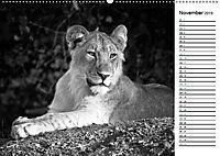 Löwen schwarz weiß (Wandkalender 2019 DIN A2 quer) - Produktdetailbild 11