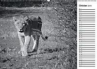 Löwen schwarz weiß (Wandkalender 2019 DIN A2 quer) - Produktdetailbild 10
