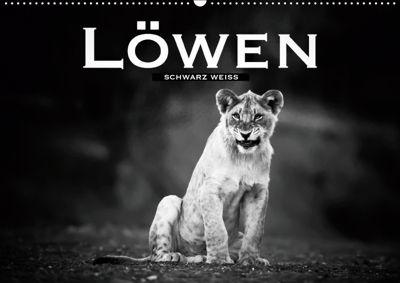 Löwen schwarz weiß (Wandkalender 2019 DIN A2 quer), Robert Styppa