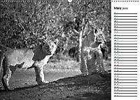 Löwen schwarz weiß (Wandkalender 2019 DIN A2 quer) - Produktdetailbild 3