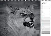 Löwen schwarz weiß (Wandkalender 2019 DIN A2 quer) - Produktdetailbild 4