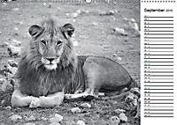 Löwen schwarz weiß (Wandkalender 2019 DIN A2 quer) - Produktdetailbild 9