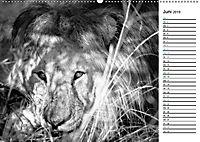 Löwen schwarz weiß (Wandkalender 2019 DIN A2 quer) - Produktdetailbild 6