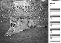 Löwen schwarz weiß (Wandkalender 2019 DIN A2 quer) - Produktdetailbild 7