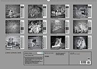 Löwen schwarz weiß (Wandkalender 2019 DIN A2 quer) - Produktdetailbild 13