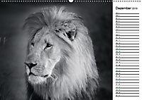 Löwen schwarz weiß (Wandkalender 2019 DIN A2 quer) - Produktdetailbild 12