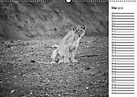 Löwen schwarz weiß (Wandkalender 2019 DIN A2 quer) - Produktdetailbild 5