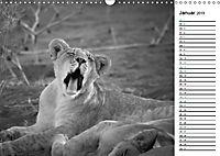 Löwen schwarz weiß (Wandkalender 2019 DIN A3 quer) - Produktdetailbild 1