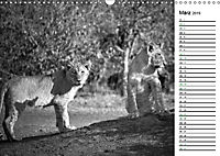 Löwen schwarz weiß (Wandkalender 2019 DIN A3 quer) - Produktdetailbild 3