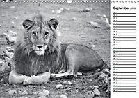 Löwen schwarz weiß (Wandkalender 2019 DIN A3 quer) - Produktdetailbild 9