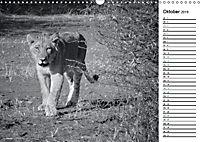Löwen schwarz weiß (Wandkalender 2019 DIN A3 quer) - Produktdetailbild 10
