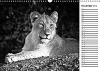 Löwen schwarz weiß (Wandkalender 2019 DIN A3 quer) - Produktdetailbild 11