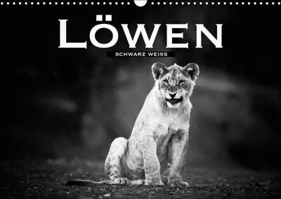 Löwen schwarz weiß (Wandkalender 2019 DIN A3 quer), Robert Styppa