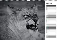 Löwen schwarz weiß (Wandkalender 2019 DIN A3 quer) - Produktdetailbild 4
