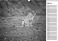 Löwen schwarz weiß (Wandkalender 2019 DIN A3 quer) - Produktdetailbild 5