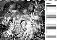 Löwen schwarz weiß (Wandkalender 2019 DIN A3 quer) - Produktdetailbild 6