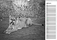 Löwen schwarz weiß (Wandkalender 2019 DIN A3 quer) - Produktdetailbild 7