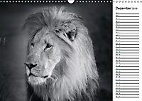 Löwen schwarz weiß (Wandkalender 2019 DIN A3 quer) - Produktdetailbild 12