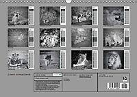 Löwen schwarz weiß (Wandkalender 2019 DIN A3 quer) - Produktdetailbild 13