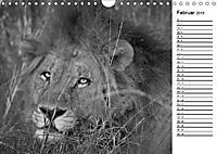 Löwen schwarz weiss (Wandkalender 2019 DIN A4 quer) - Produktdetailbild 2