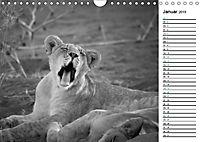 Löwen schwarz weiss (Wandkalender 2019 DIN A4 quer) - Produktdetailbild 1