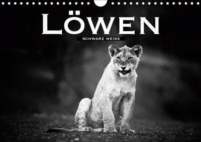 Löwen schwarz weiss (Wandkalender 2019 DIN A4 quer), Robert Styppa