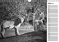 Löwen schwarz weiss (Wandkalender 2019 DIN A4 quer) - Produktdetailbild 3