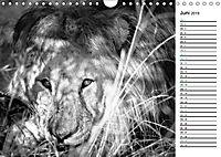 Löwen schwarz weiss (Wandkalender 2019 DIN A4 quer) - Produktdetailbild 6