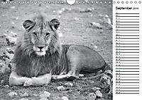 Löwen schwarz weiss (Wandkalender 2019 DIN A4 quer) - Produktdetailbild 9