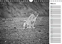 Löwen schwarz weiss (Wandkalender 2019 DIN A4 quer) - Produktdetailbild 5