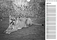 Löwen schwarz weiss (Wandkalender 2019 DIN A4 quer) - Produktdetailbild 7