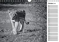 Löwen schwarz weiss (Wandkalender 2019 DIN A4 quer) - Produktdetailbild 10