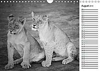Löwen schwarz weiss (Wandkalender 2019 DIN A4 quer) - Produktdetailbild 8