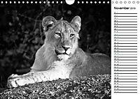 Löwen schwarz weiss (Wandkalender 2019 DIN A4 quer) - Produktdetailbild 11