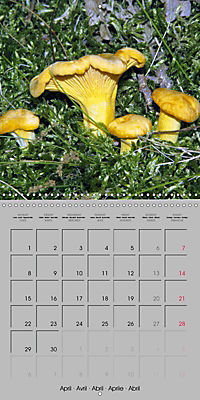Looking for mushrooms (Wall Calendar 2019 300 × 300 mm Square) - Produktdetailbild 4