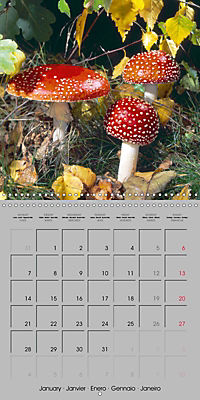 Looking for mushrooms (Wall Calendar 2019 300 × 300 mm Square) - Produktdetailbild 1