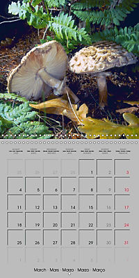 Looking for mushrooms (Wall Calendar 2019 300 × 300 mm Square) - Produktdetailbild 3