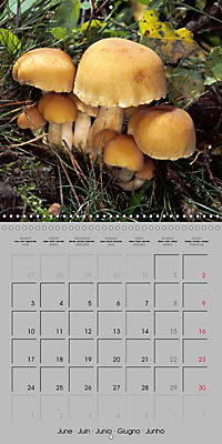 Looking for mushrooms (Wall Calendar 2019 300 × 300 mm Square) - Produktdetailbild 6