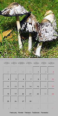 Looking for mushrooms (Wall Calendar 2019 300 × 300 mm Square) - Produktdetailbild 2