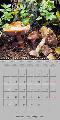 Looking for mushrooms (Wall Calendar 2019 300 × 300 mm Square) - Produktdetailbild 5
