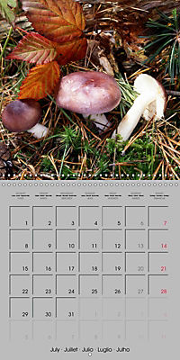 Looking for mushrooms (Wall Calendar 2019 300 × 300 mm Square) - Produktdetailbild 7